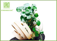 China Unique Bamboo Plant Pot Hanging Flower Box , Bamboo Flower Containers Customized Handle factory